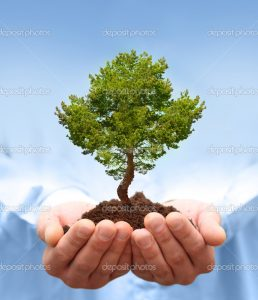 depositphotos_26654409-Man-hands-holding-a-green-tree.-Ecology-concept